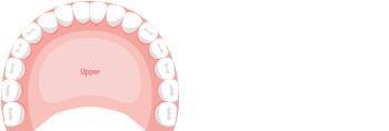 Dr. Brianne Luu Dental Meridian Tooth Chart